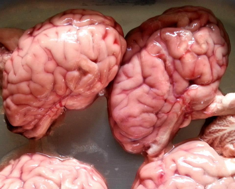 Хороший телячий мозг должен быть нежно розовым, без кровоподтеков.По моему наш был идеален.